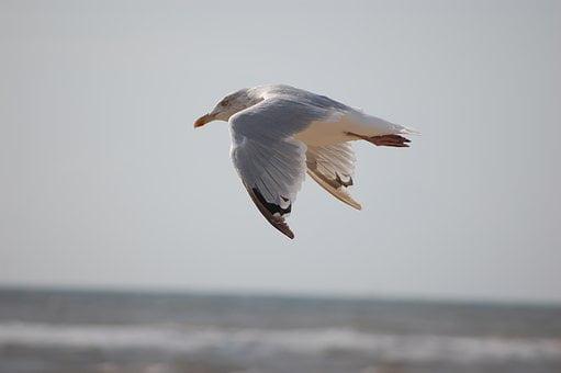 Burung-burung Amat Taat Kepada Allah